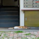 足立区竹の塚三丁目:猫