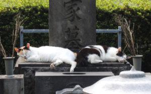 東京都豊島区雑司が谷:雑司ヶ谷霊園