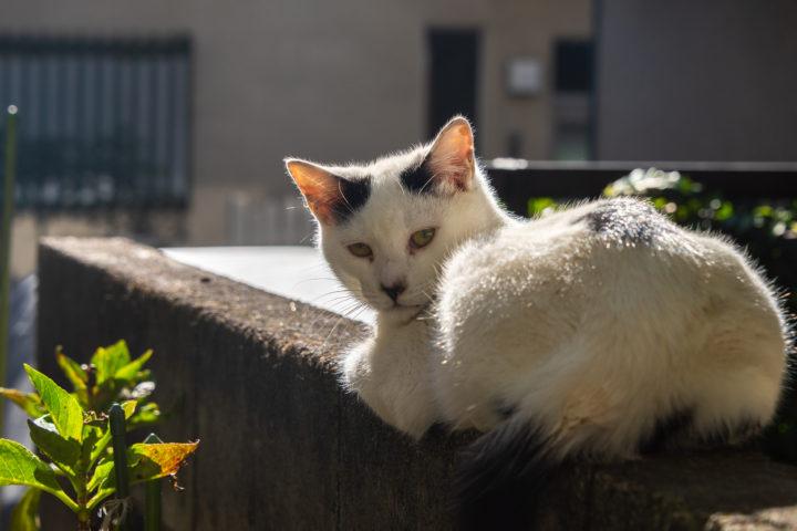 東京都豊島区池袋:猫