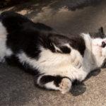 東京都渋谷区本町:猫