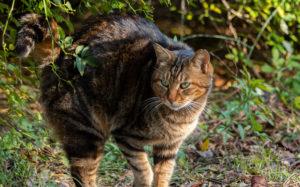 東京都文京区小石川:小石川植物園 猫