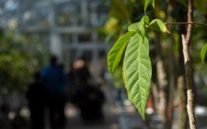 東京都文京区小石川:小石川植物園 温室