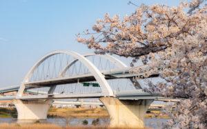 東京都足立区宮城:荒川土手 桜