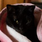 猫:東京都豊島区池袋