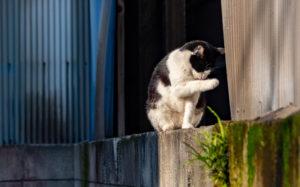 東京都葛飾区立石:猫