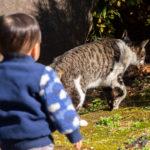 東京都文京区大塚:護国寺 猫