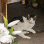 東京都荒川区東尾久:猫