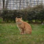 東京都北区豊島:荒川の猫