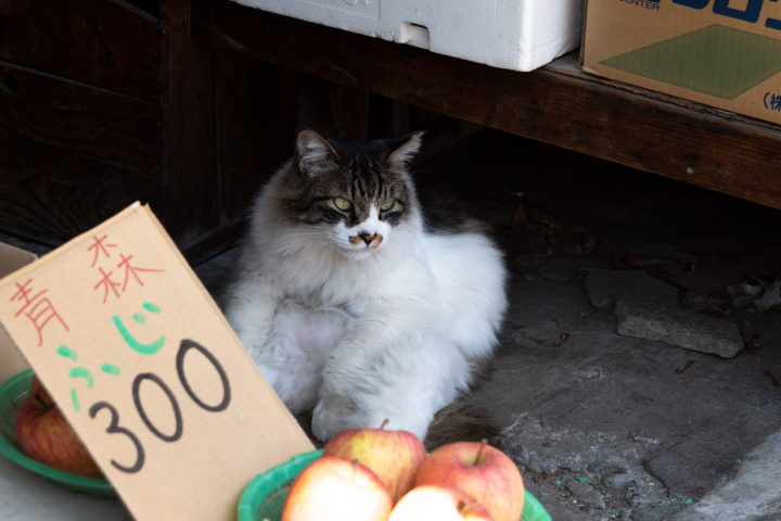 東京都墨田区東向島:猫
