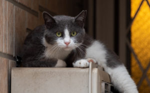 東京都豊島区東池袋:猫