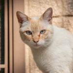 東京都豊島区雑司が谷:猫