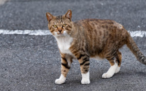 東京都荒川区西尾久:猫